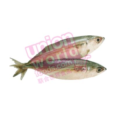Kimson Indian Mackerel 1kg